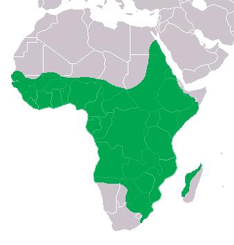 Crocodile du Nil en Afrique